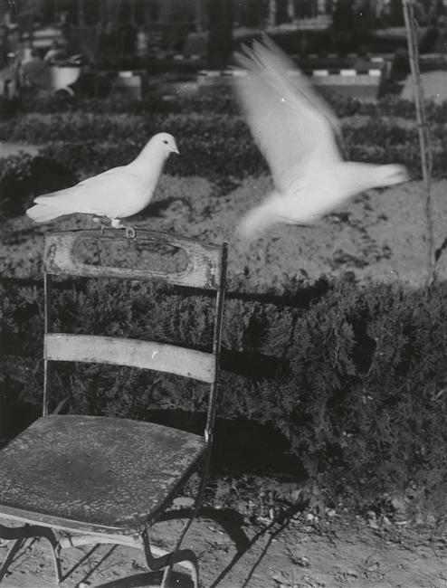 Brassaï - Pigeons à Séville, 1950. … via rmn