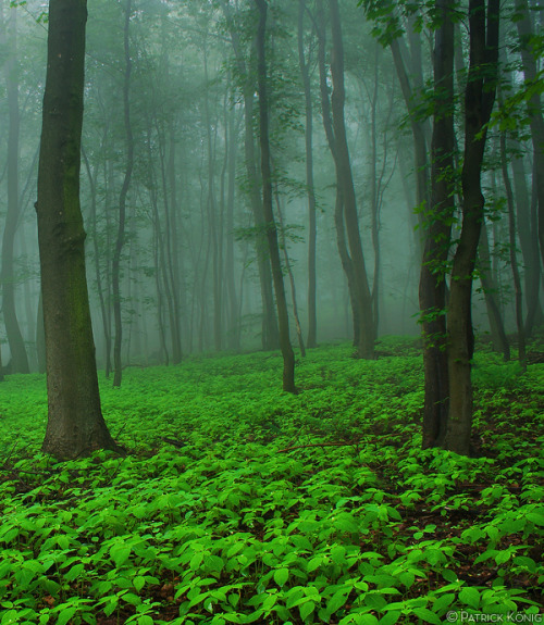 woodendreams:  (by Patrick König)