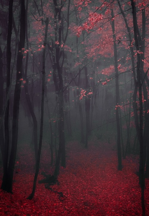 vanderlism:  In the forest dark and deep is where i seek my eternal sleep