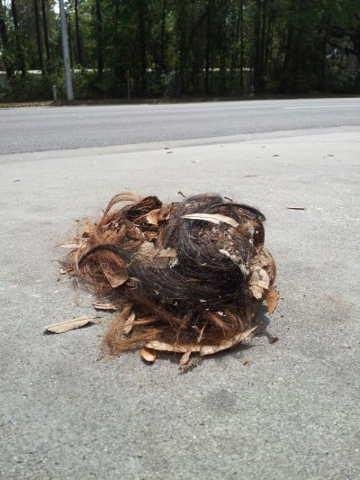 all-of-the-funny:  Only in the ghetto can you find a tumbleweave.  piles of funny