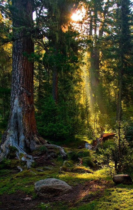 Sun Beam Forest, Russia photo via phoebe