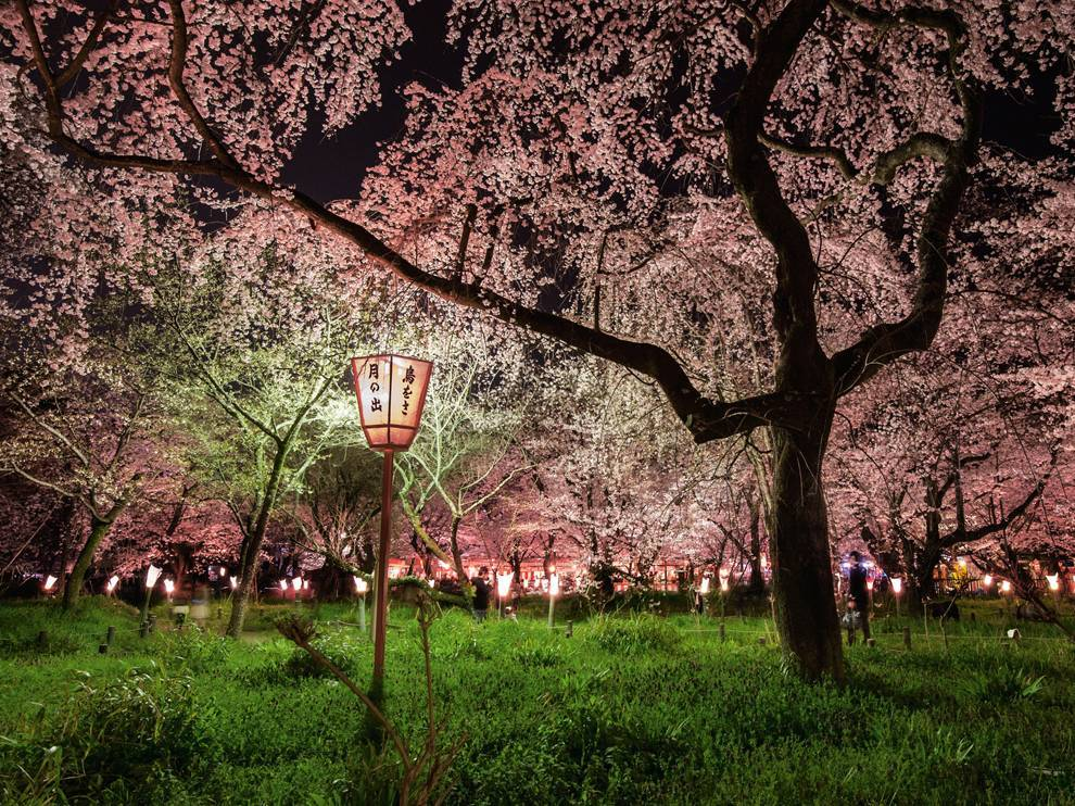 Cherry Blossoms, JapanPhoto: Diane Cooke and Len Jenshel