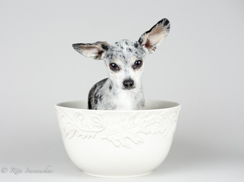 llbwwb:  Todays Cuteness,for the dog lovers:) Snack (by Rita Ivanauskas)
