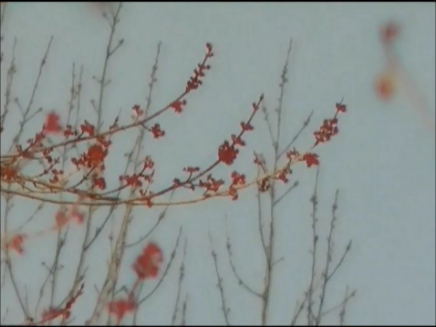 video frame from home movies/notes.    — early springtime trees in bloom —