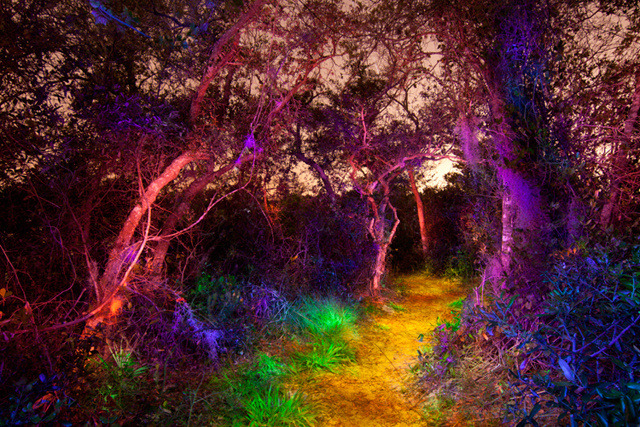 Light Painting A Darkened Woodland Into A Magical Wonderland
