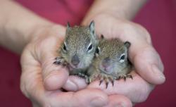 baby squirrels! SO cute!!