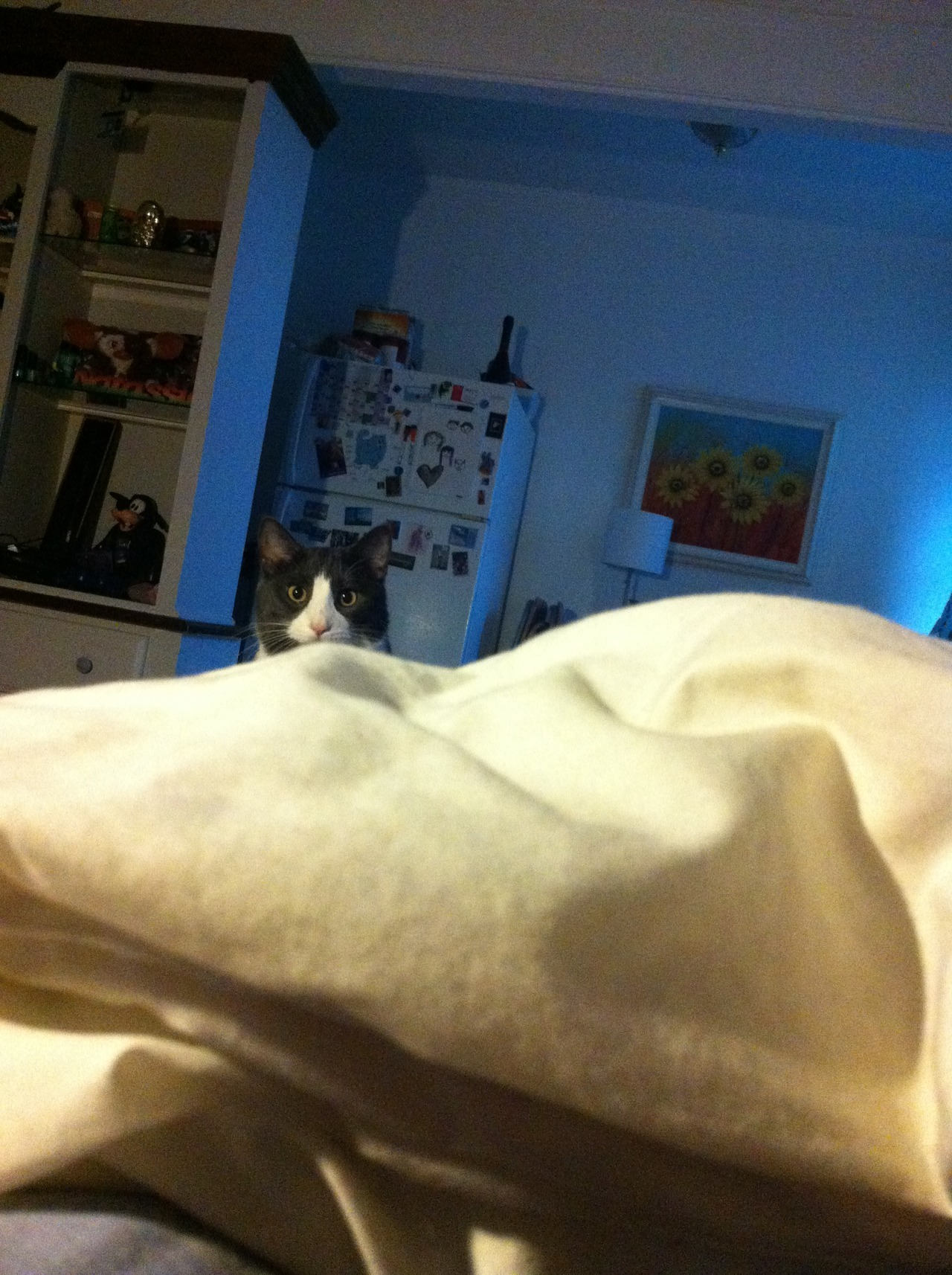 "catsbeaversandducks:  ""It's 4:00 am… WHERE'S. MY. DAMN. BREAKFAST?"" Via derpy cats  That's a cat, all right."