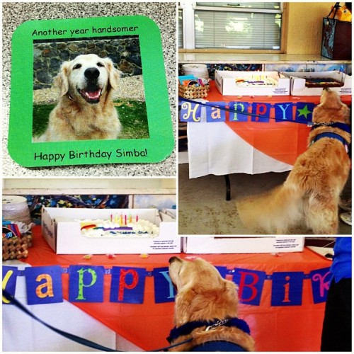Happy 8th Birthday Simba!!! We had a party at work for our hospital's therapy dog & my afternoon buddy Simba! (at Rehabilitation Hospital Of The Pacific)