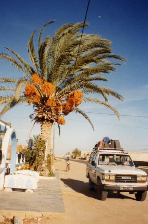 italdred:  Date Palm - Tunisia (by Kaptain Kobold)