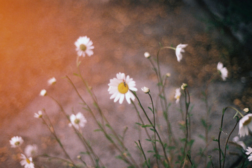 moanarch:  . by toi ♥ on Flickr.