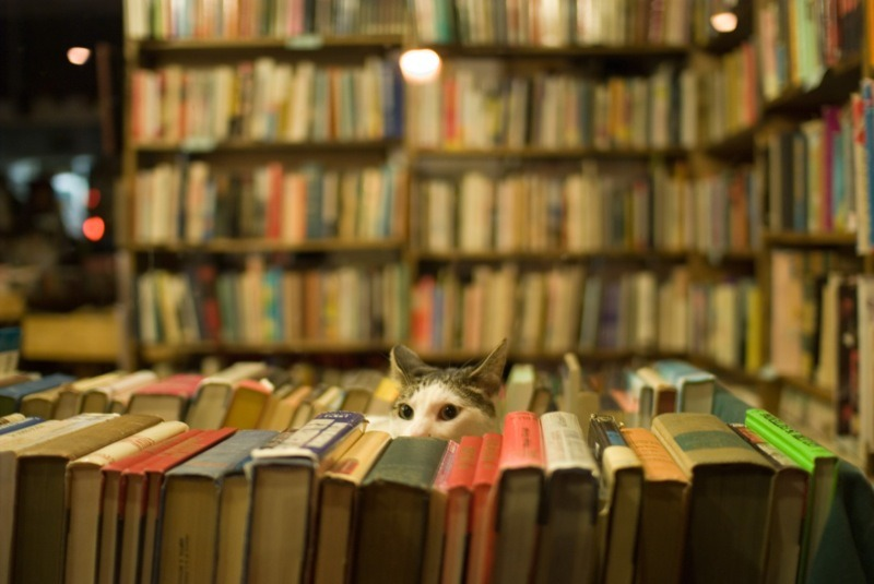 778:  Another Bookstore Cat (via texasgurl)