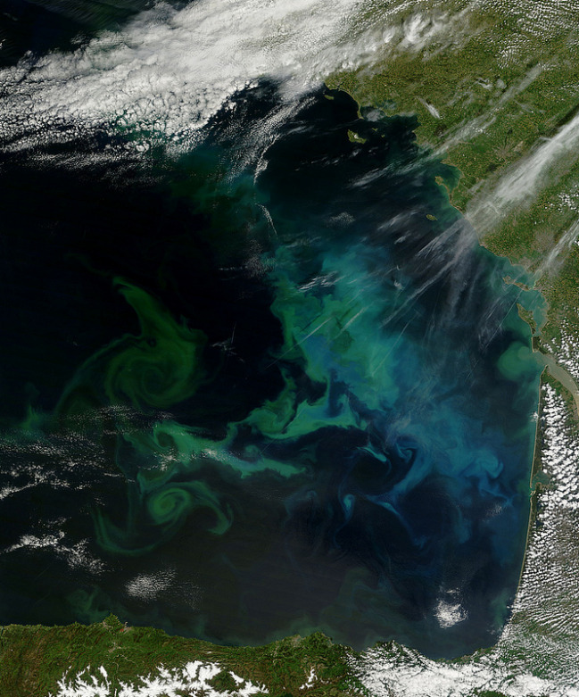 Bay of Biscay's blooming Phytoplankton