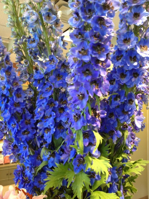 Giant delphinium. Love California in April.