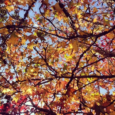 Winter. Sigh. #leaves #winter #newzealand #webstagram