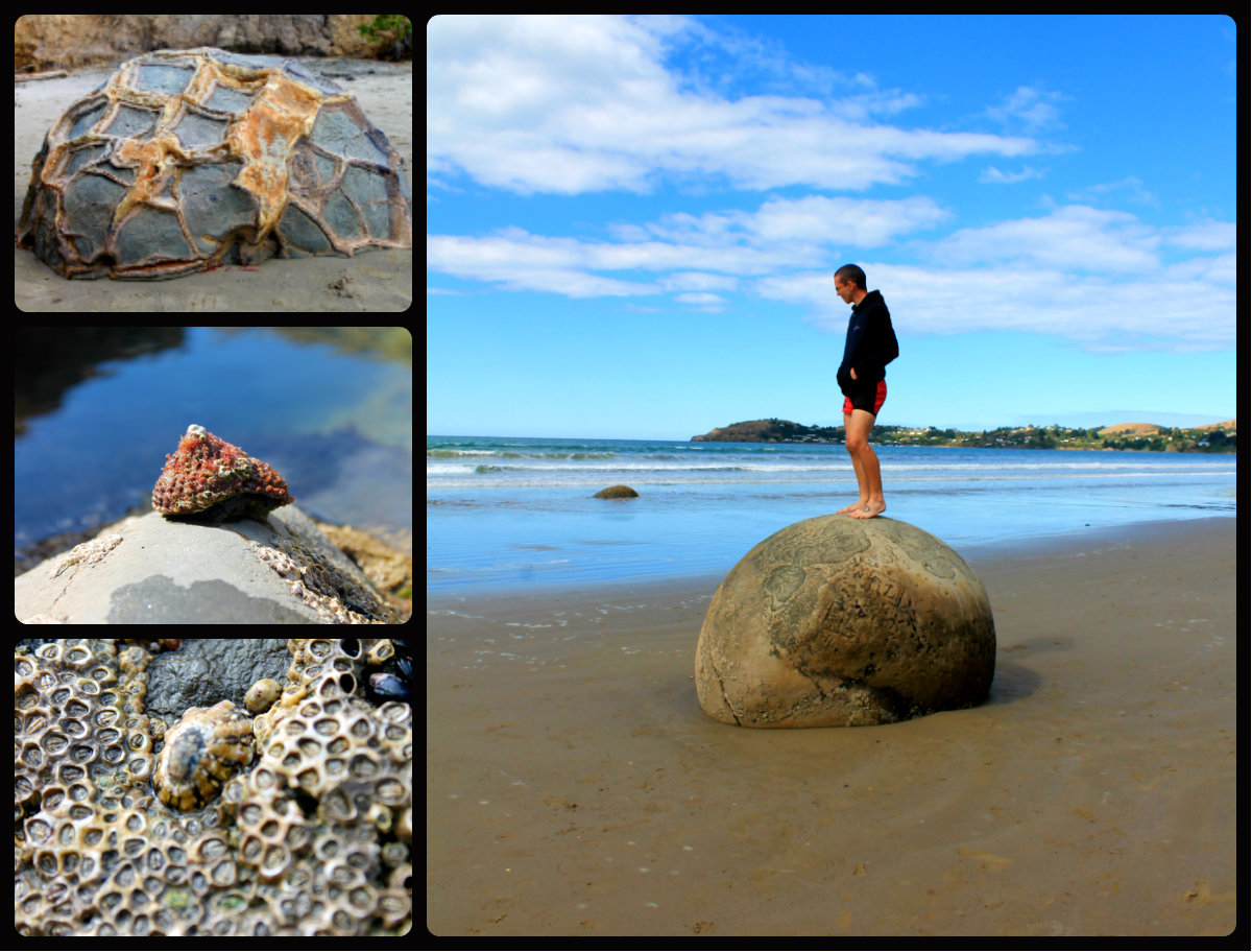 Moeraki Boulders, South Island, New Zealand.  February 2013. The best part is his iphone took pictures just as nicely as my dslr.