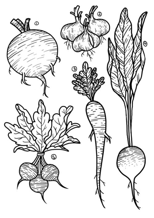tattoo tattoo tuesday flash flashsheet tattoo design root vegetables blackwork etching procreate illustration