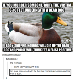 Taking murder advice from ducks…