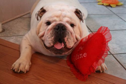 Hey Wrinkle fans! I missed Valentine's Day, but here are some after-holiday wrinkles! Credit: The Bulldog Forums
