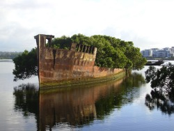 102-Year-Old Abandoned Ship is a Floating Forest / Image by Andy Brill The SS Ayrfield is one of many decommissioned ships in the Homebush Bay, just west of Sydney, but what separates it from the other stranded vessels is the incredible foliage that adorns the rusted hull. The beautiful spectacle, also referred to as The Floating Forest, adds a bit of life to the area, which happens to be a sort of ship graveyard.