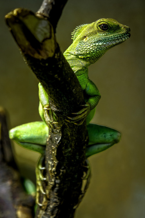 animalkingd0m:  Posing by Thorsten Scheel