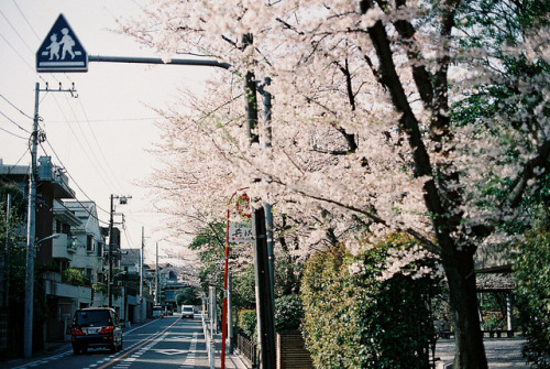 dreams-of-japan:  untitled by hiki. on Flickr.