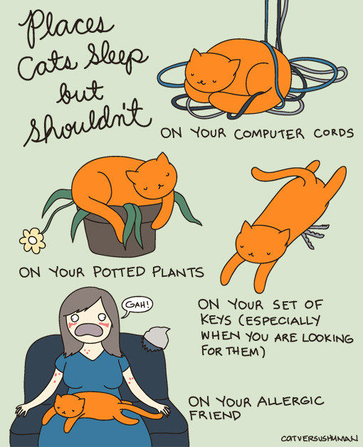 laughingsquid:  Places Cats Sleep but Shouldn't  GPOY re: my cats