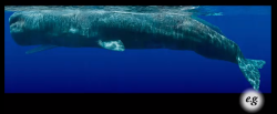 foratv:  Whale photographer Bryant Austin took a mosaic of high resolution photographs and stitched together a lifesize image of a whale at an unimaginable scale.