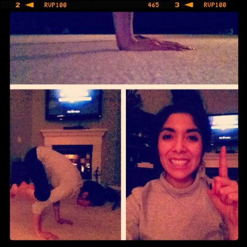 #picstitch #yay for hittin your #goal!! #yoga goal #crowspose!! I cane even push out into the #plank So #happy!!!!😃😀😊😍👍💪💃