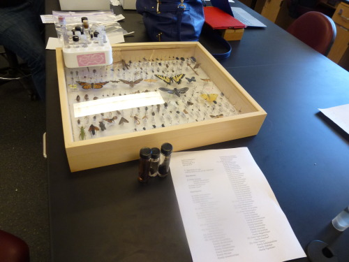 I wish every class could be Entomology..