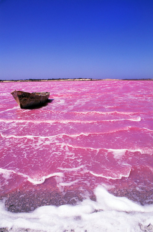 condenasttraveler:  Natural Wonders | Lac Rose, Senegal  Hey, remember when we got a postcard from Lac Rose? Lumarie Perez-Guzman, Spencer Debenport, John Reeve and Amanda Davey sent us a photo from that microbial interactions and sustainable soil management workshop in Senegal. Good times.  Send us your own postcard from abroad: go.osu.edu/postcards