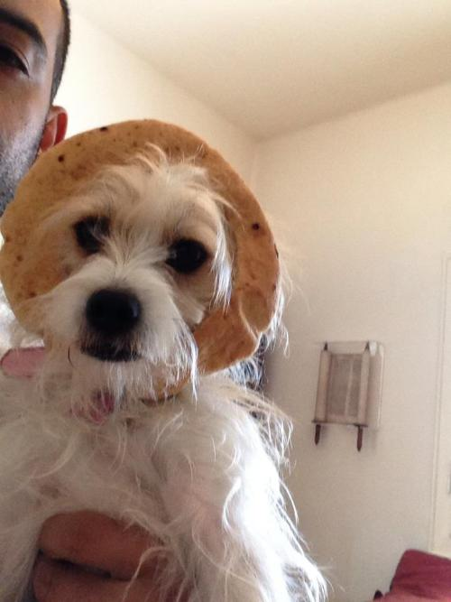 "Happy Purim! Here is my dear Lucy with her costume: ""Hot Dog Mediterranean style"" . Enjoy"
