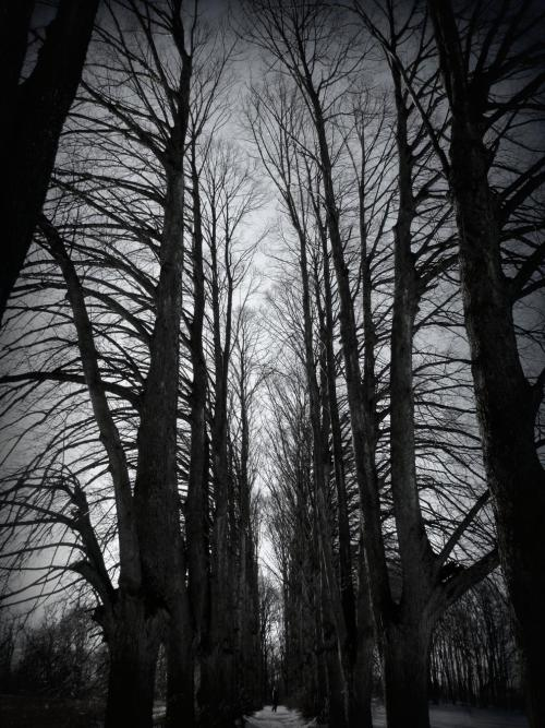 cathedral - alley of elms