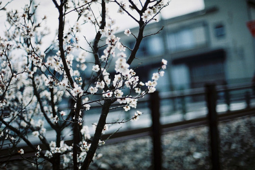 ileftmyheartintokyo:  untitled by Kumiko_oMochi on Flickr.