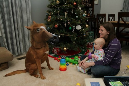 Cool! Someone got their baby a pony for Christmas!  	(We have the horse head masks in stock at http://www.jbox.com/product/US0001)