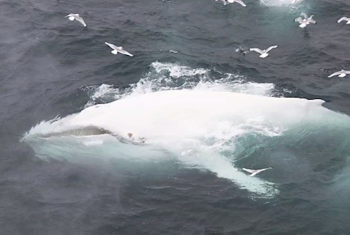 Spotting a rare white humpback whale. Coming face to face with lions. Hanging out with albatross on the most remote atoll in the world. This year we have seen some incredible animal images. We've rounded up our most exciting, beautiful, and interesting images from the year. Enjoy. 15 Amazing Animal Photos from 2012