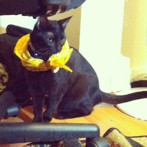 Cat in a bandana pt. 2 #yuna (at The TARDIS)