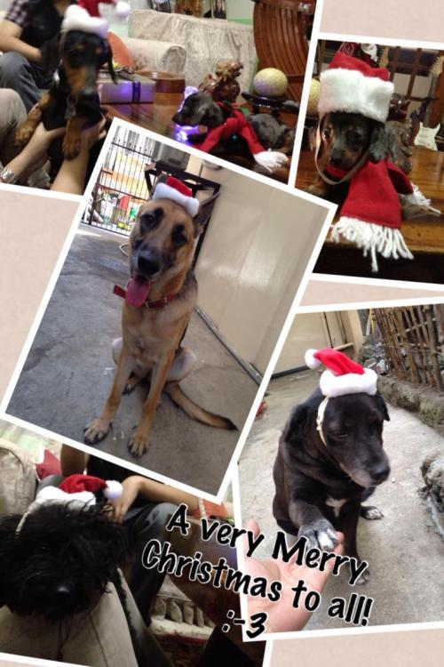 Merry Christmas from all of our dogs