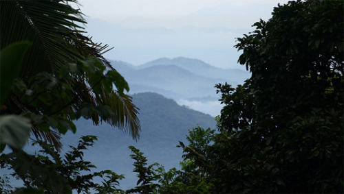 mothernaturenetwork:  Honduras rain forest may be home to ruins of lost city Light detection and ranging reveals images that could be canals, roads, building foundations and terraced agricultural land.