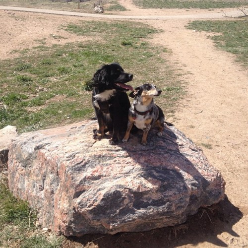 Captain and Petey on the gneiss🐾😄 (at Chatfield Reservoir Dog Park)