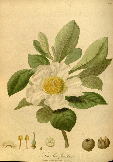 jomobimo:  The paradisus londinensis:. London :Printed by D.N. Shury, and published by William Hooker,1805-1807..