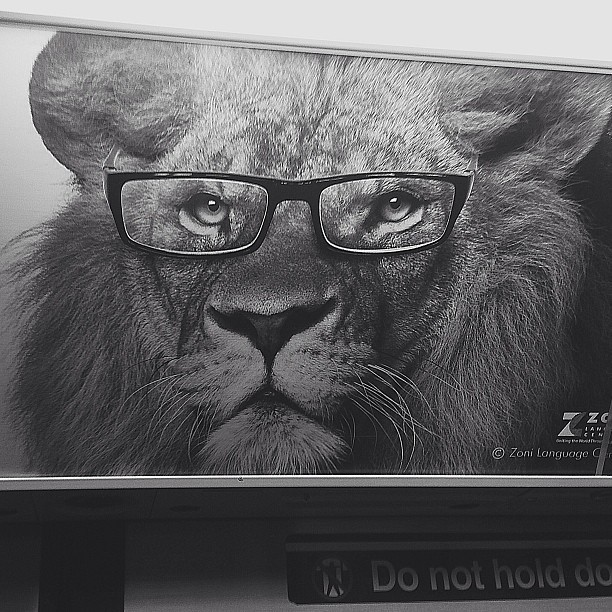 Highbrow lion.