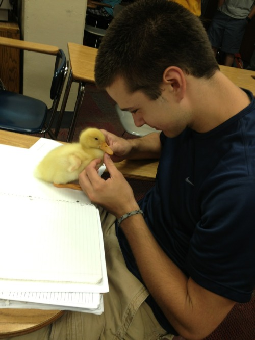 thatfunnyblog:      THERE HE IS, WHAT A GEM AND LOOK AT THAT FUCKING DUCKLING AH I CAN'T  love how we all know what duckling this was referring to  Funny Stuff you like?