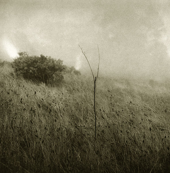 Grass in the Fog, 2000Unai San Martin
