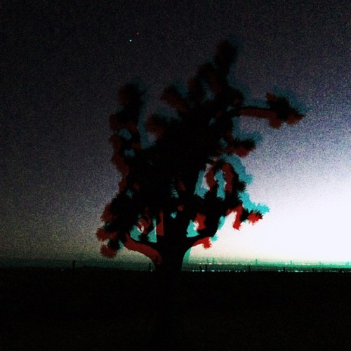 Joshua Tree (at In The Desert)