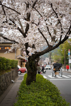 Sakura street by xx573v3xx on Flickr. It's May everybody!  May is a good season for tourism in Japan, as there is a big festival. Do you know what it is?