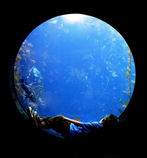 "Everyone has a ""can't-miss"" exhibit at the Aquarium. What's yours? (©Beckett Gladney) Learn more about our exhibits."