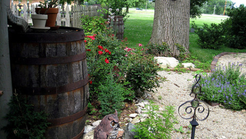 mothernaturenetwork:  How to start a home rain barrel project Water is precious and becoming more scarce. Try a rain barrel in your yard to use 'free' water for irrigation and limit what you run from the tap.