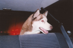 Lumi in the car at night