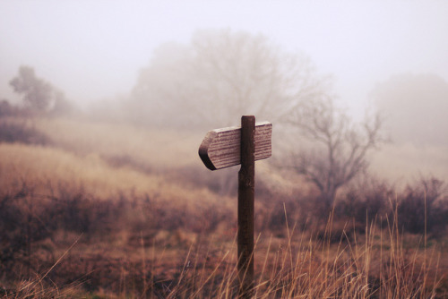 untitled by www.aliciarey.com on Flickr.