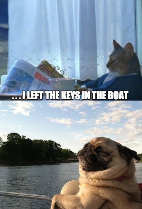 srsfunny:  Living The Pug Lifehttp://srsfunny.tumblr.com/